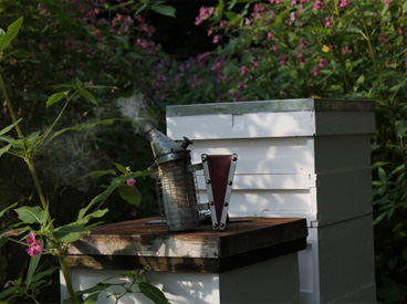 Need Beekeeper Equipment?